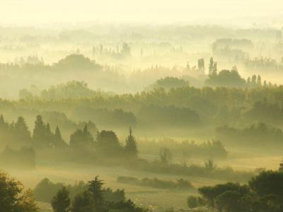 Morning Fog  in Provence