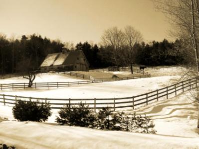 Winter Grazing